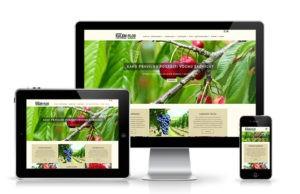 Izrada veb sajta Krusevac